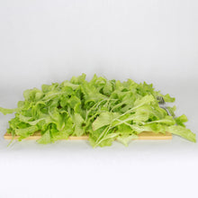 Leaf Lettuce Yield