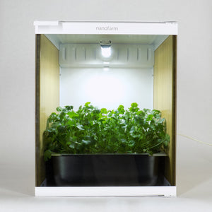 Cilantro Microgreens grown in Nanofarm