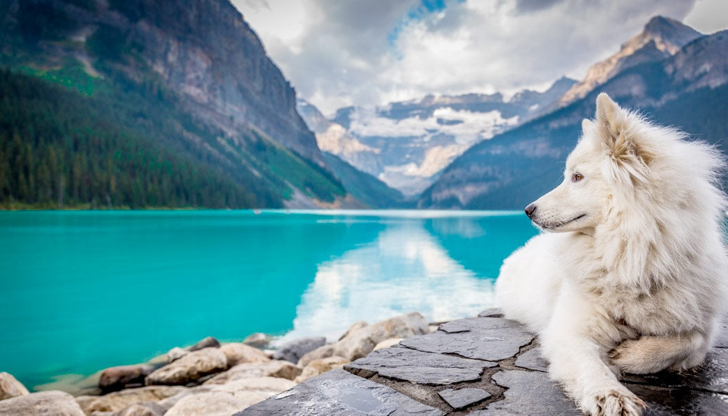 a calm dog relaxing in the mountaians