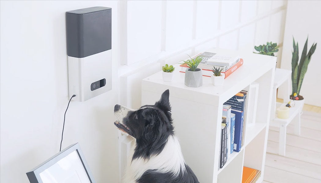 Dog waiting for treat from machine