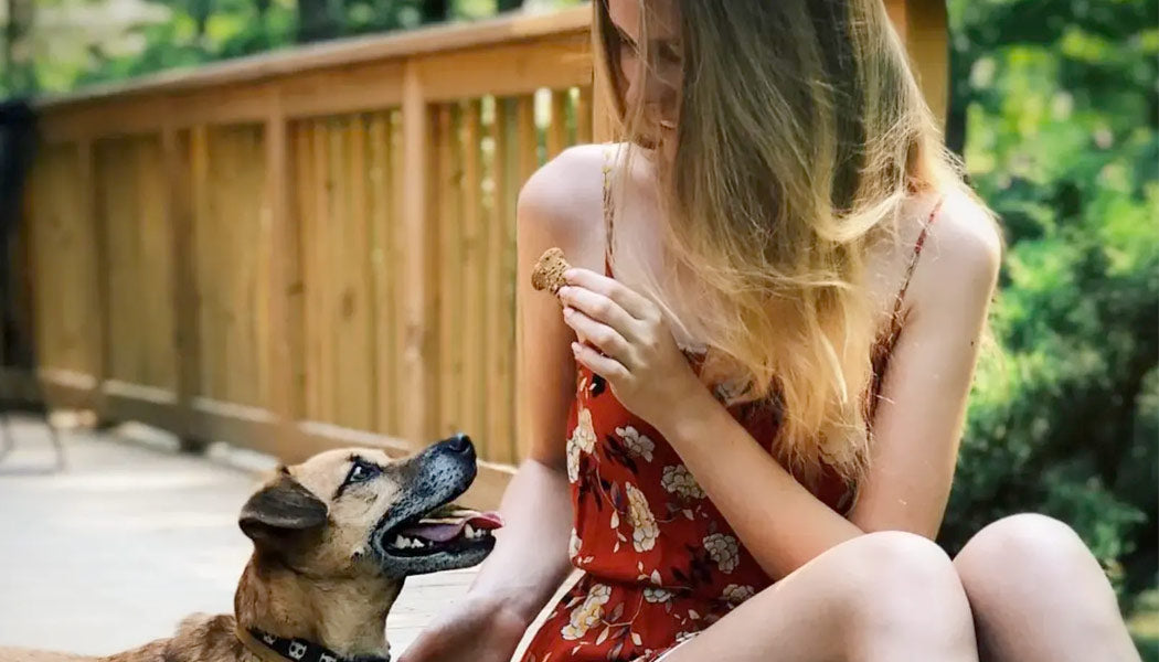 Tips to keep your dog calm