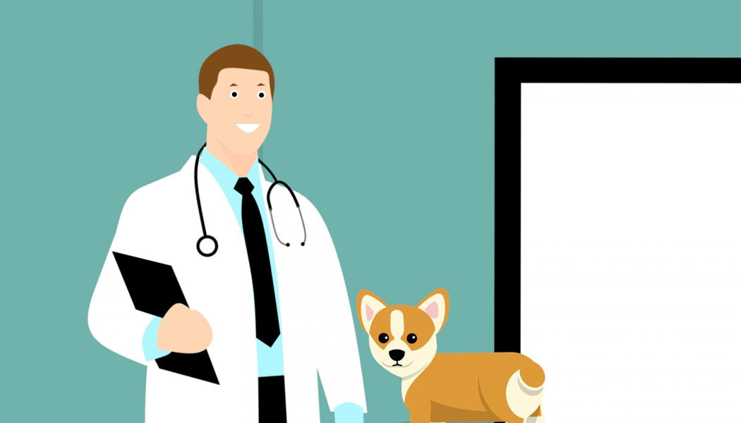 When to see the vet for your dog