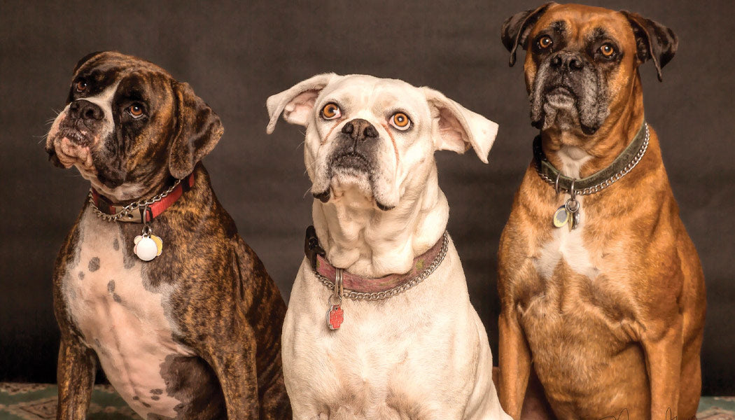 Three dogs looking up