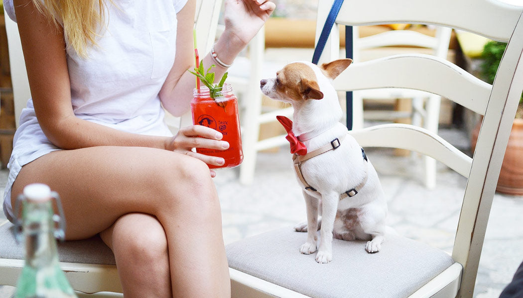 Drinking out with my dog