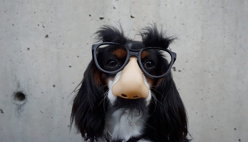 Calm dog wearing disguise