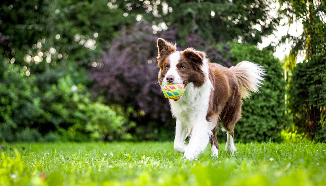 dog with a ball at the park