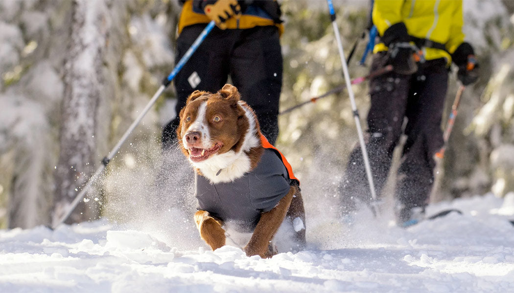 Cloud Chaser coat for dogs
