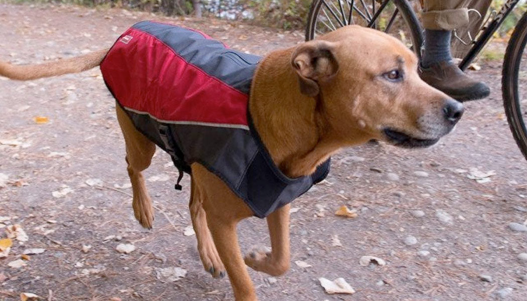 Element jacket for dogs
