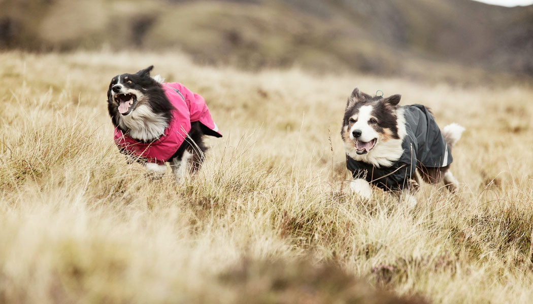Summit Parka coat for dogs