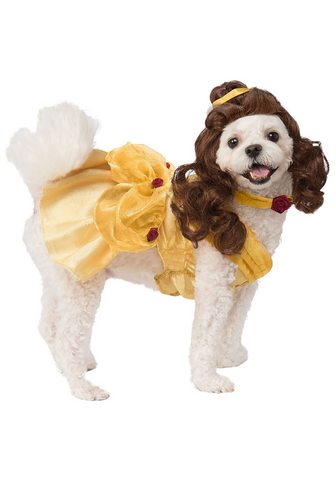 A dog wearing a costume from Beauty & the Beast