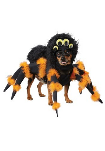 A dog wearing a spider costume