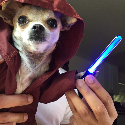 Chihuahua dog wearing a Jedi cape and holding a lightsaber.