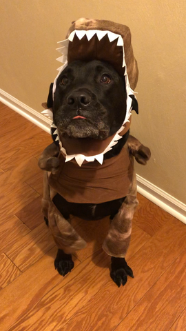 Dog dressed in a dinosaur costume.