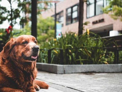 MSM can improve your dog's health and lifespan