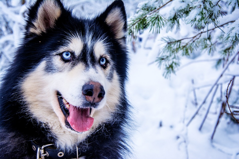 What dog breeds love the cold?
