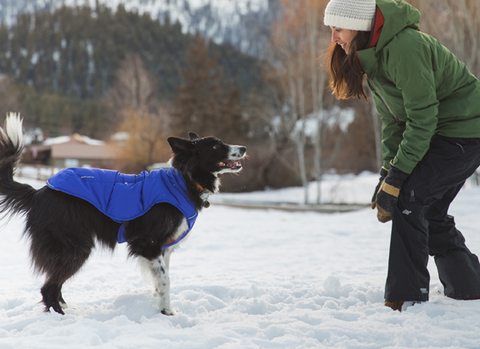 Quinzee Coat for dogs