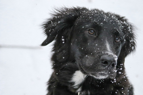 Do all dogs need to be kept warm during the winter?