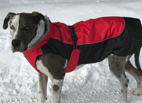 All-Weather Coat for dogs