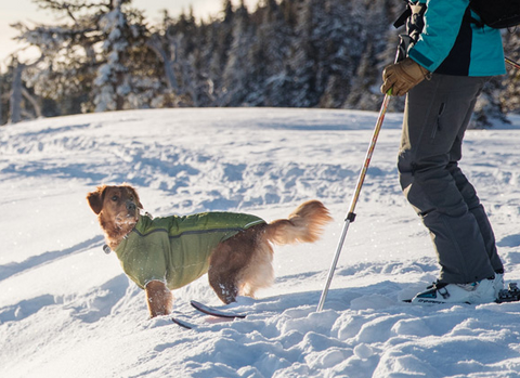 Powderhound suit for dogs