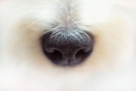 A dog's strong nose