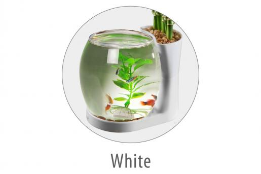 NATURAL WORLD AQUARIUM SIGLE TANK (White) - Epetshopcy