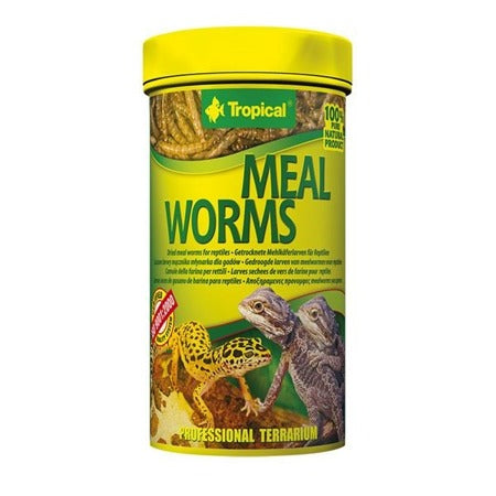 MEAL WORMS - Epetshopcy