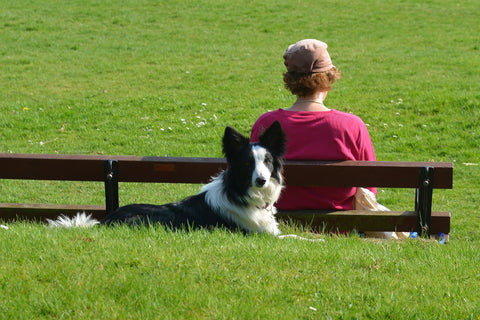 Some Top Dog Tips for Dogs And Their Owners!