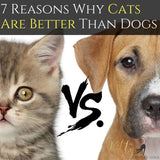 Cats vs. Dogs - 7 Reasons Why Cats Are Better Than Dogs