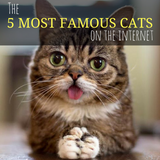 The 5 Most Famous Cats On The Internet