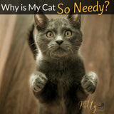 Why Is My Cat So Needy? - 7 Reasons Explained
