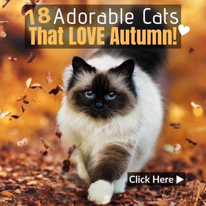 Autumn Cats - 18 Images of Cats Loving Fall