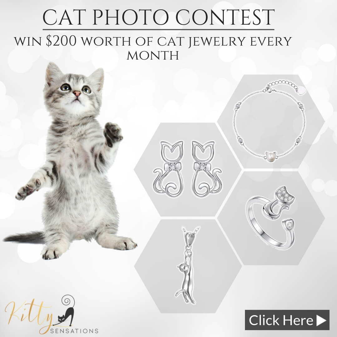 Cat Contest - Monthly Photo Competiton With Prizes