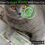 How To Make Money With Your Cat - 5 Proven Methods