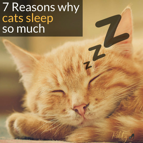 Why Do Cats Sleep So Much? - 7 Reasons You Need to Know