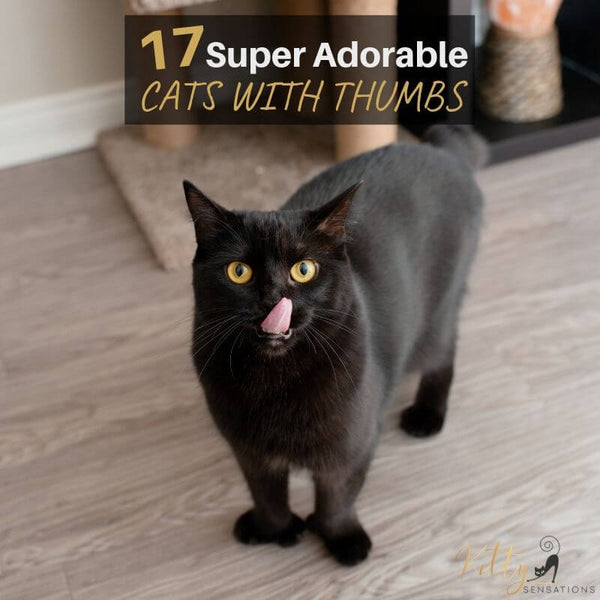 17 adorable cats with thumbs blog post image