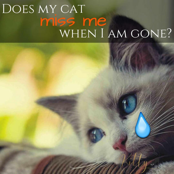 does my cat miss me when I am gone picture kittysensations
