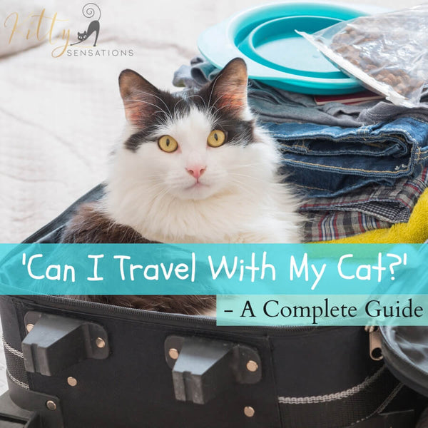 can i travel with my cat image
