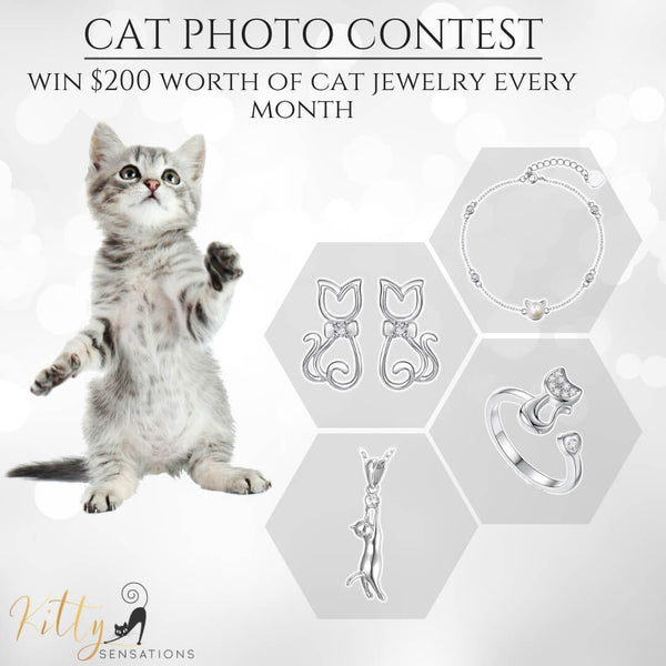 Cat Contest Cutest Cat Photo Competition