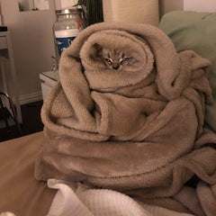 cat snuggled up in blanket contest winner