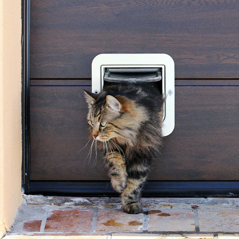 cat walking through cat flap kittysensations