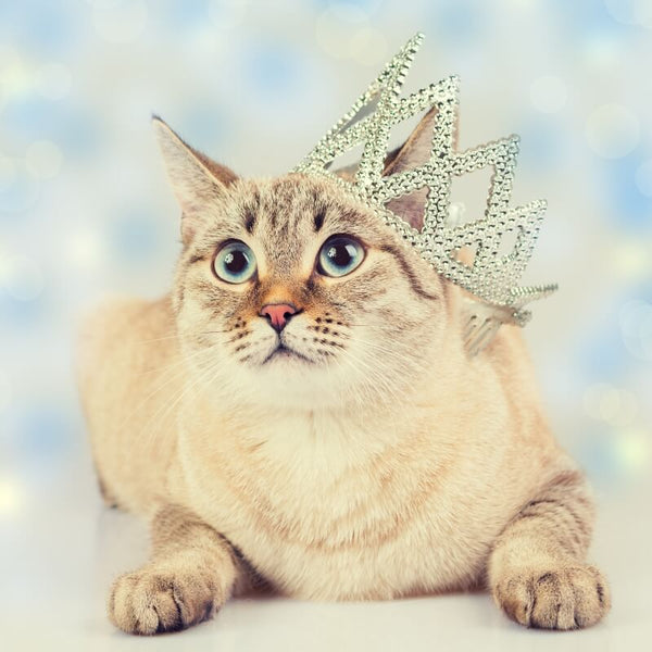 cat modelling with crown