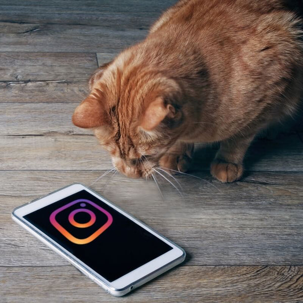 cat looking at smartphone with instagram logo