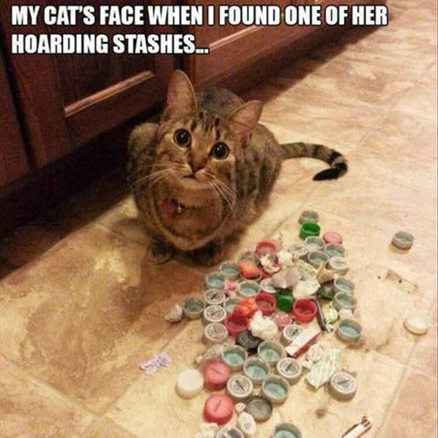 cats face when hoard is found kittysensations