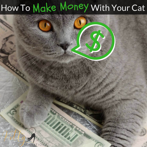 how to make money with your cat header picture