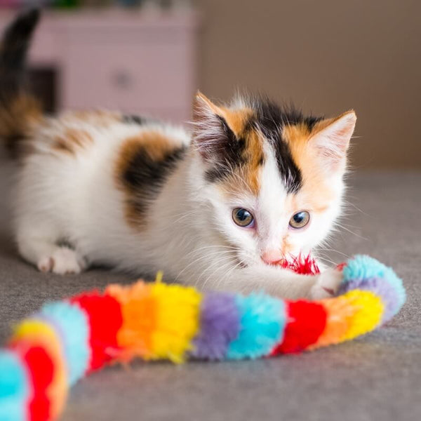 young kitty playing with colorful toy
