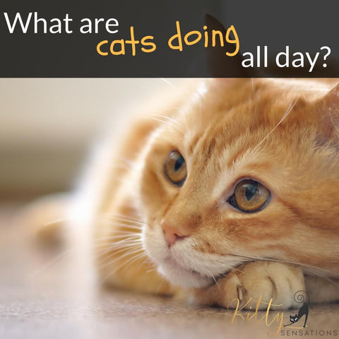 what are cats doing all day banner kittysensations