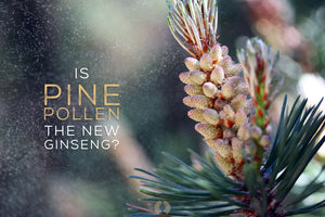 How Will Pine Pollen Benefit You?