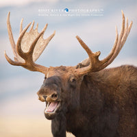 Ω Square -  Laughing Moose