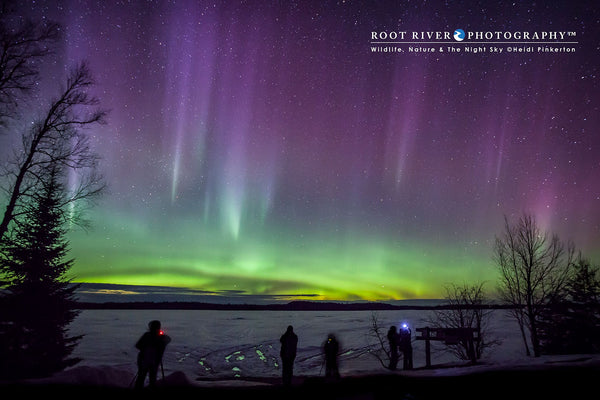The Northern Lights Experience