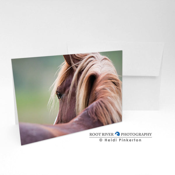 Horses - A Lady's Gaze Greeting Card